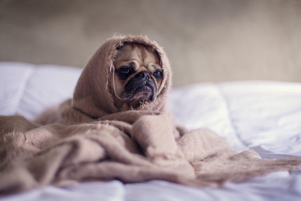 petit chien triste